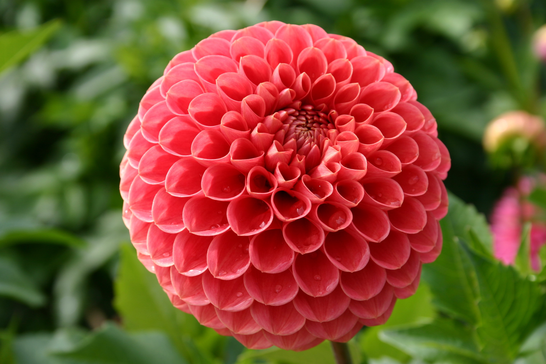 most beautiful flowers - HD3041×2028
